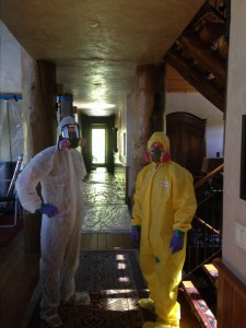 Mold Removal Professionals