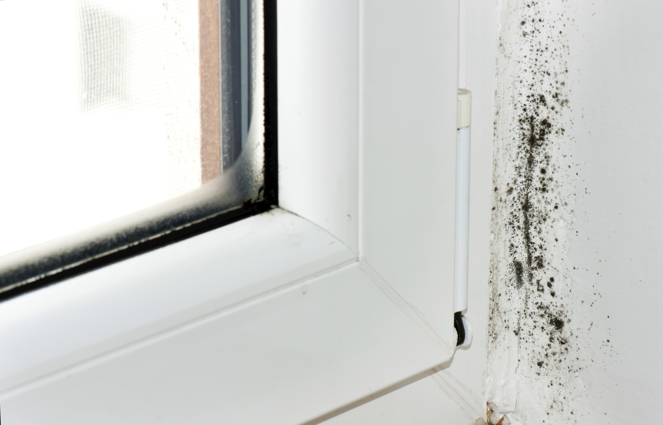 Causes And Signs Black Mold