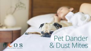 Asthma Pet Dander Dust Mites