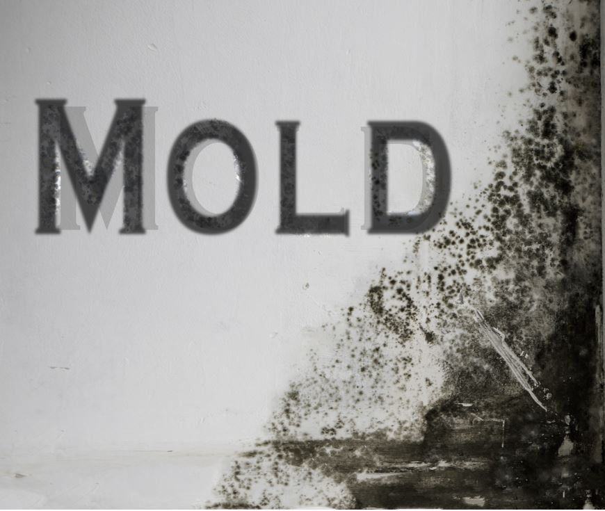 Mold Mitigation Denver
